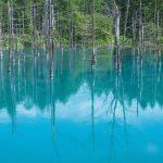 美瑛の青い池の見時と夜のライトアップ情報まとめ