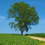 世界が注目した哲学の木。これまでの経緯と現在を調べてみた