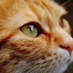 ボヘミアンラプソディは猫映画としても傑作といわれている理由は?